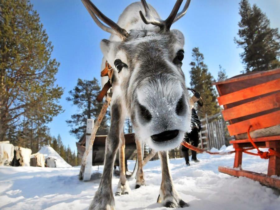 К Санта Клаусу в Лапландию