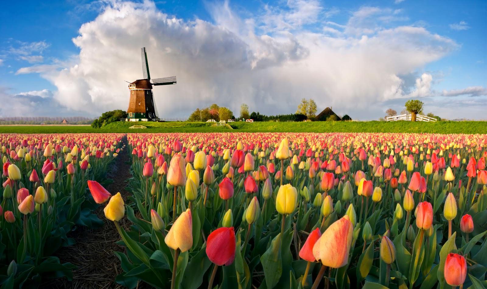 Цветы Европы