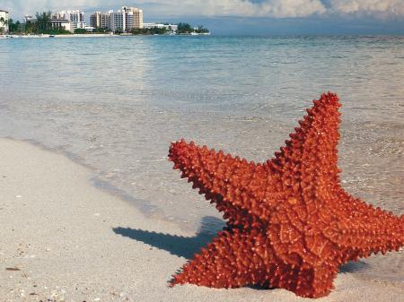 Восточные Карибы из Майами