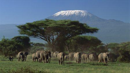 Эксклюзивный тур в Танзанию: «SkySafari»