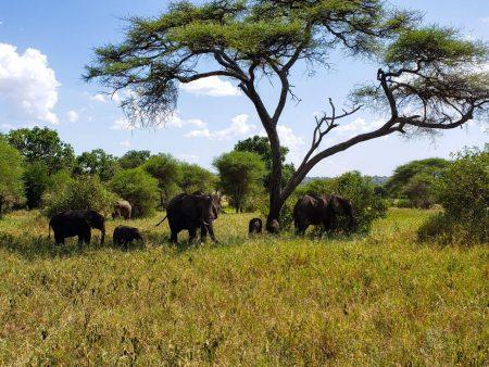 Танзания + отдых на Занзибаре!
